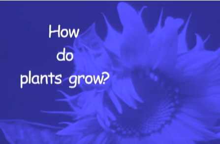 How Plants Work Cover Photo