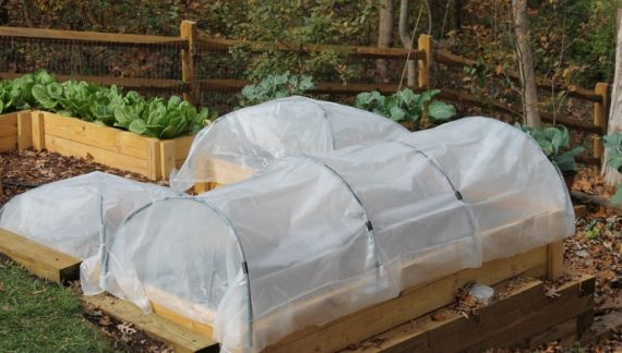 Protect Your Plants From Cold