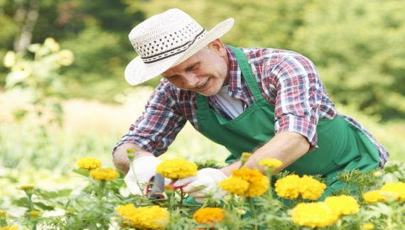 garden-pruning